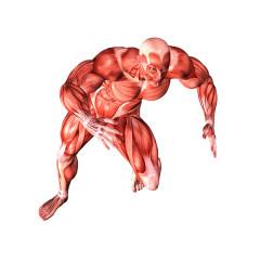 Test Muscolare Kinesiologico dei 14 Muscoli Principali